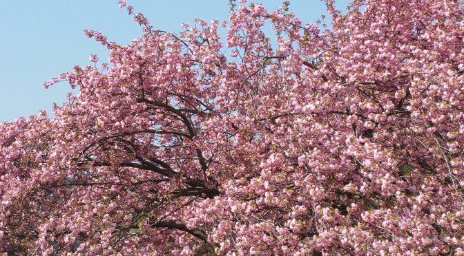 Frühling auf und vor meinem Balkon